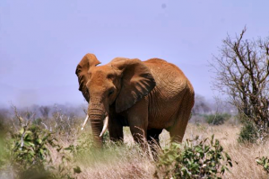 06 elephant2